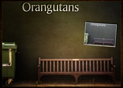 Twycross-Zoo_Orangutans_thumb.jpg