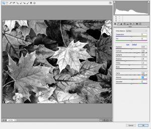 Tint-Leaves-CameraRawFil