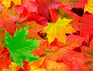 Tint-Leaves-Color