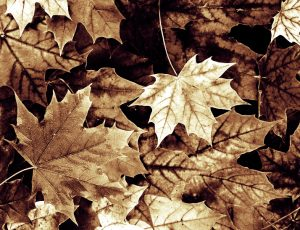 Tint-Leaves-Gradient-SoftLight