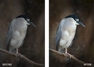 Control Exposure and Focus in Photoshop by Rich Harrington