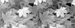 Tint-Leaves-B&W-SideBySide