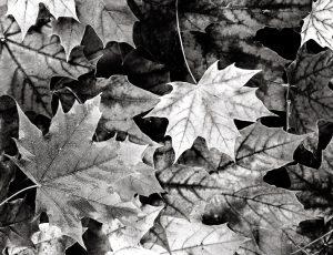 Tint-Leaves-Blue-Selinium2