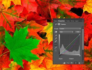 Tint-Leaves-Curves